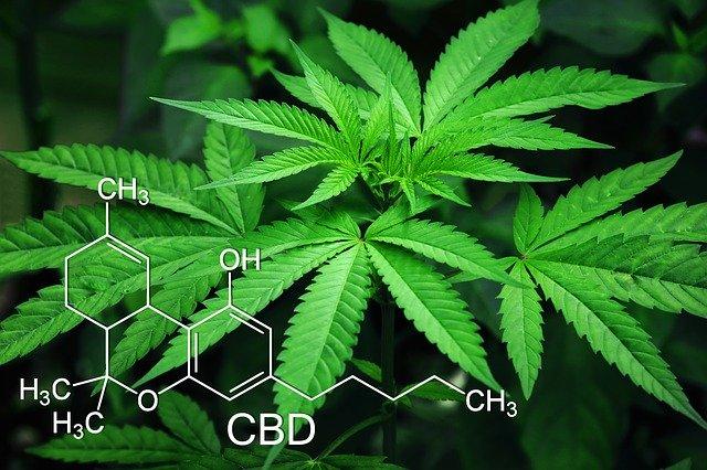 marihuana + chemický vzorek CBD